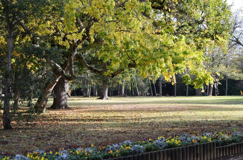 Sylvothérapie, le bien-être au pied de mon arbre